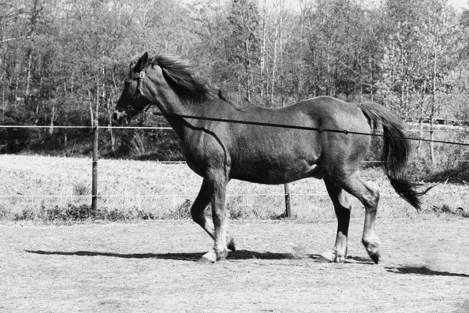 Paard Centraal Zomerkamp