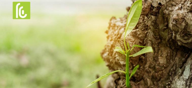 Ecologisch drukwerk – Open Tuinen