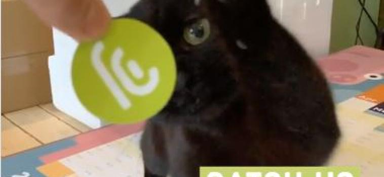 CATch us online [UPDATE]